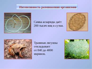 Самка аскариды даёт 200 тысяч яиц в сутки. Интенсивность размножения организм...