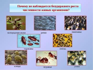 Почему не наблюдается безудержного роста численности живых организмов? рачки ...