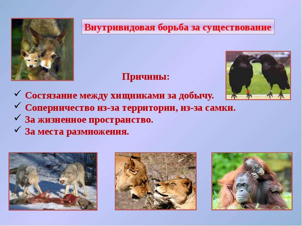 Причины: Состязание между хищниками за добычу. Соперничество из-за территории...