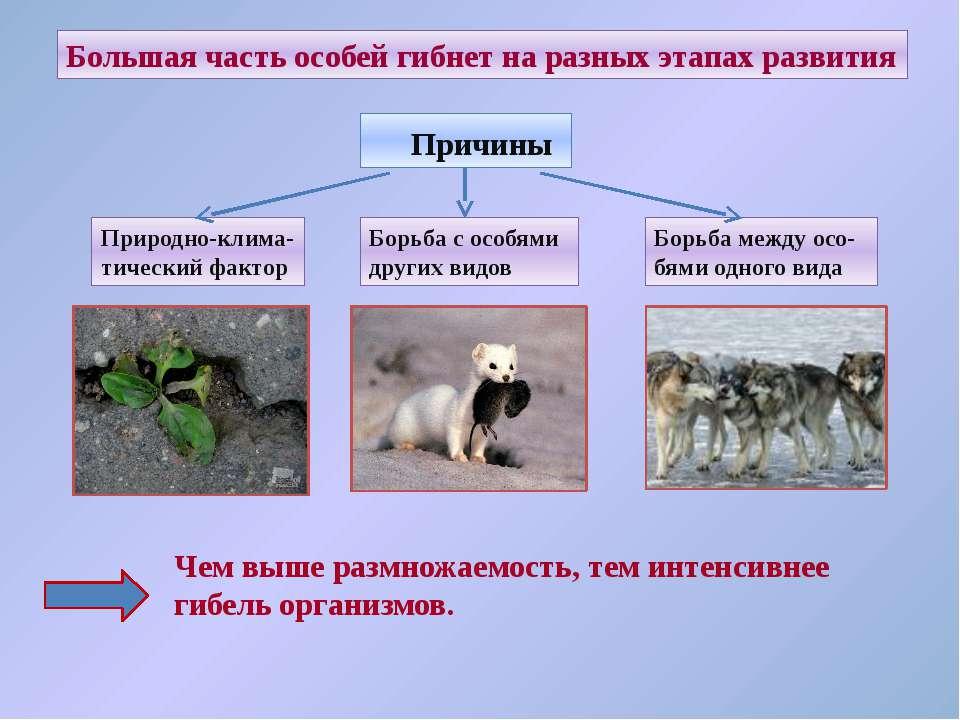 Большая часть особей гибнет на разных этапах развития Причины Природно-клима-...