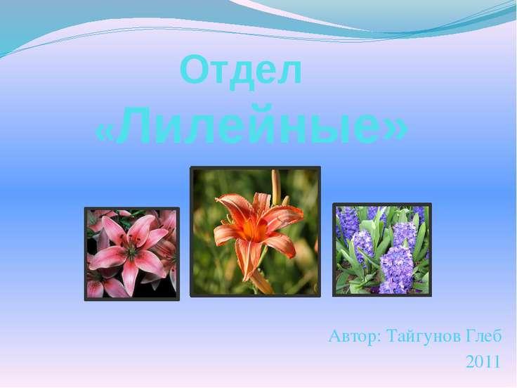 Отдел «Лилейные» Автор: Тайгунов Глеб 2011