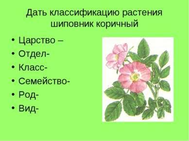 Дать классификацию растения шиповник коричный Царство – Отдел- Класс- Семейст...