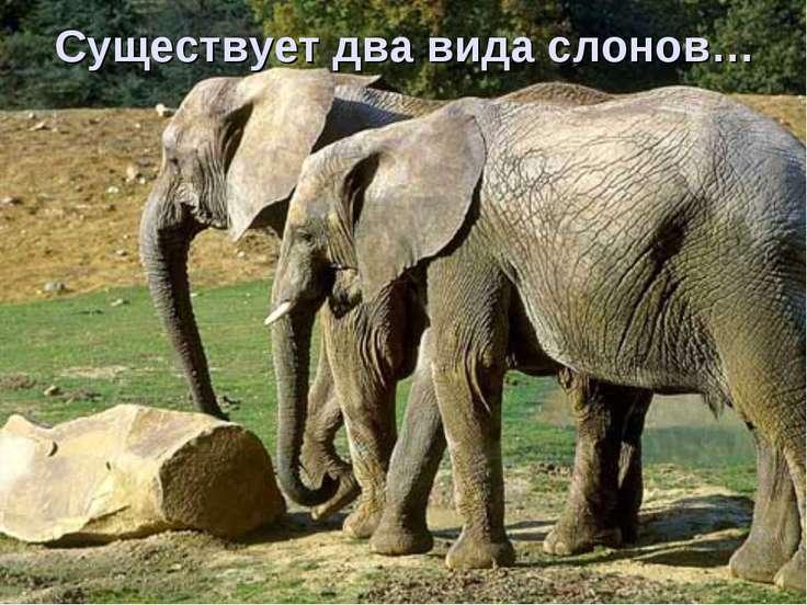 Существует два вида слонов…
