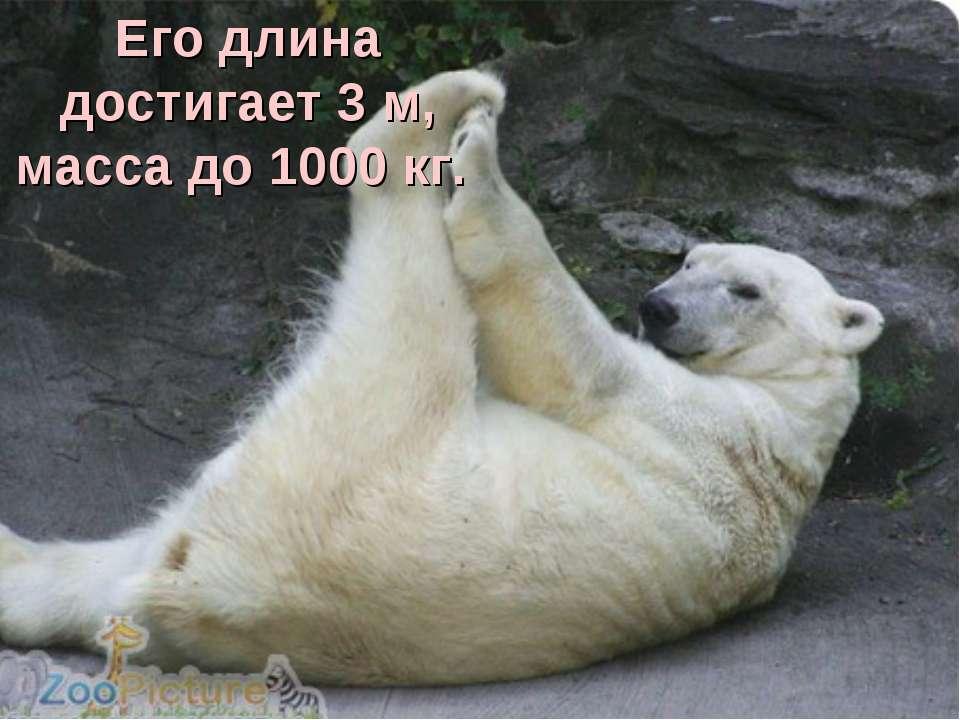 Его длина достигает 3 м, масса до 1000 кг.