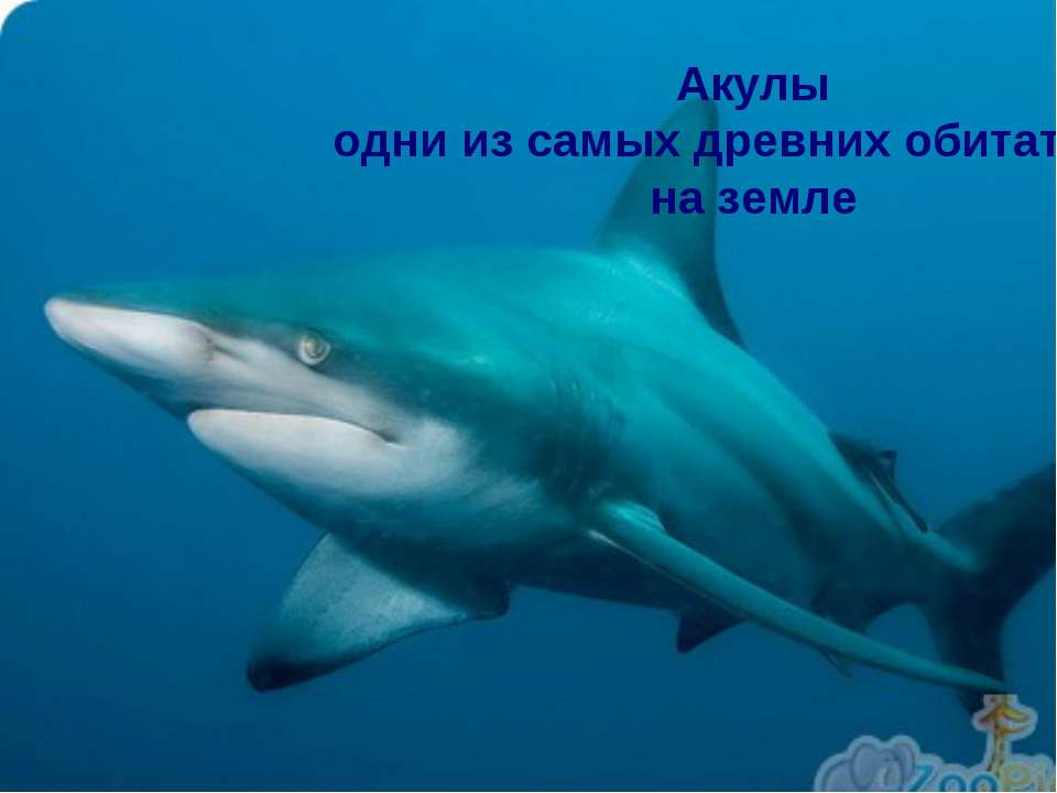 Акулы одни из самых древних обитателей на земле