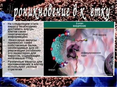 На следующем этапе вирусу необходимо доставить внутрь клетки свою генетическу...