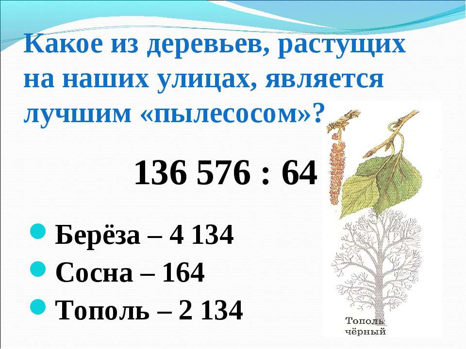 Какое из деревьев, растущих на наших улицах, является лучшим «пылесосом»? 136...