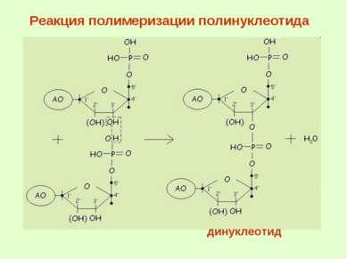 Реакция полимеризации полинуклеотида динуклеотид