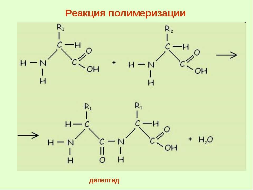 дипептид Реакция полимеризации