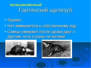 Гаитянский щелезуб Ядовит Нет иммунитета к собственному яду Самцы умирают пос...