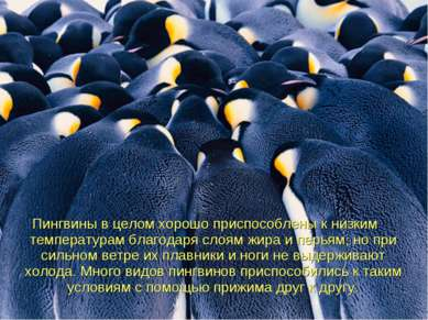 Пингвиныв целом хорошо приспособлены к низким температурам благодаря слоям ж...