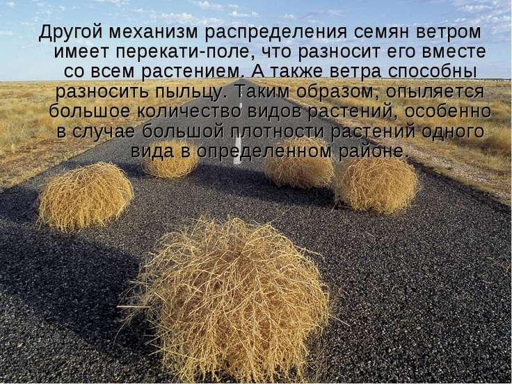 Другой механизм распределения семян ветром имеетперекати-поле, что разносит ...