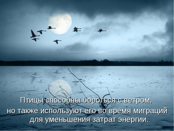 Птицыспособны бороться с ветром, но также используют его во время миграций д...