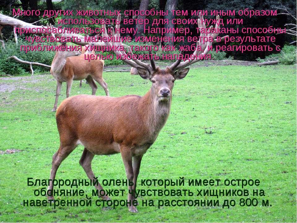 Много других животных способны тем или иным образом использовать ветер для св...