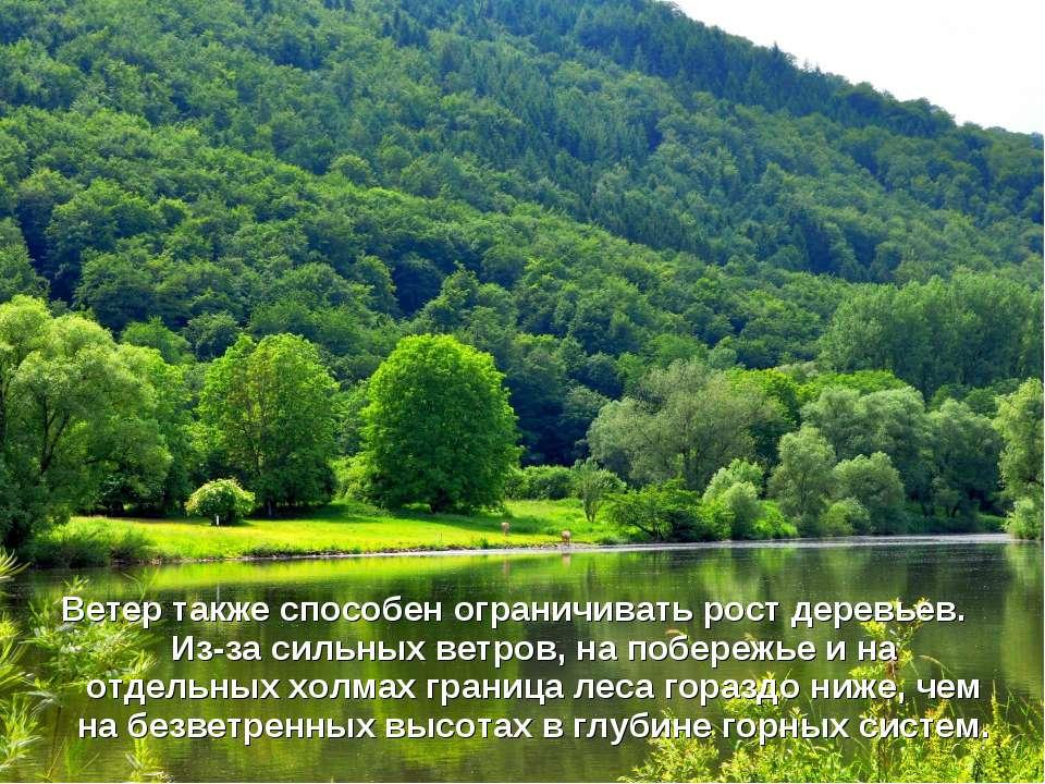 Ветер также способен ограничивать рост деревьев. Из-за сильных ветров, на поб...