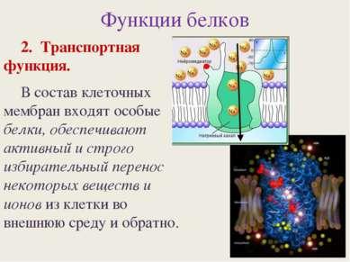Функции белков 2. Транспортная функция. В состав клеточных мембран входят осо...