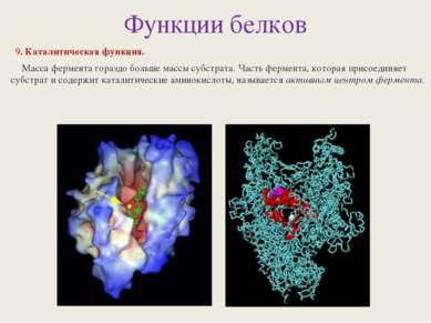 Функции белков 9. Каталитическая функция. Масса фермента гораздо больше массы...