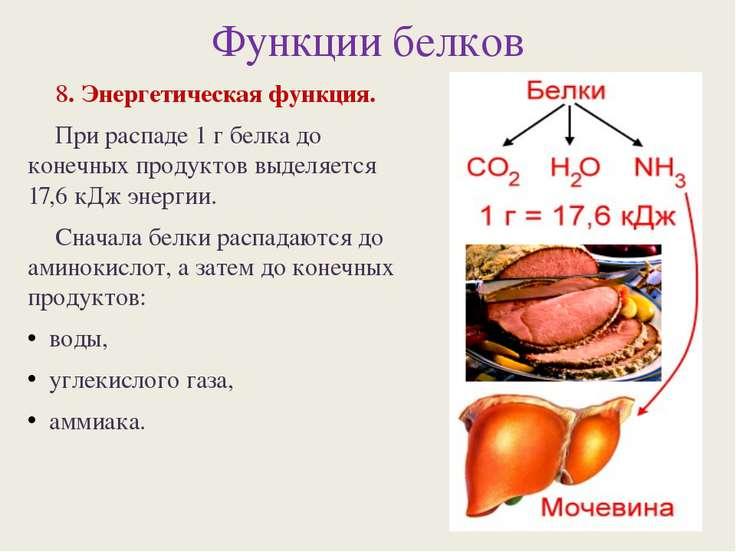 Функции белков 8. Энергетическая функция. При распаде 1 г белка до конечных п...