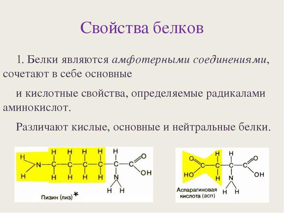 Свойства белков 1. Белки являются амфотерными соединениями, сочетают в себе о...