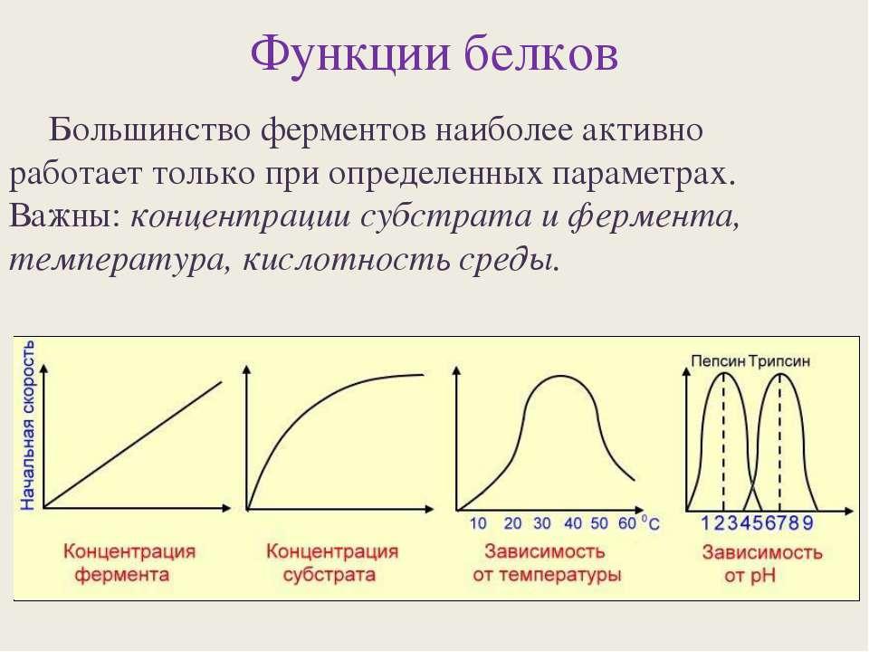 Функции белков Большинство ферментов наиболее активно работает только при опр...