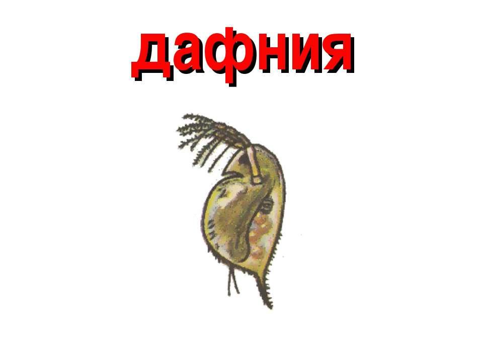 дафния
