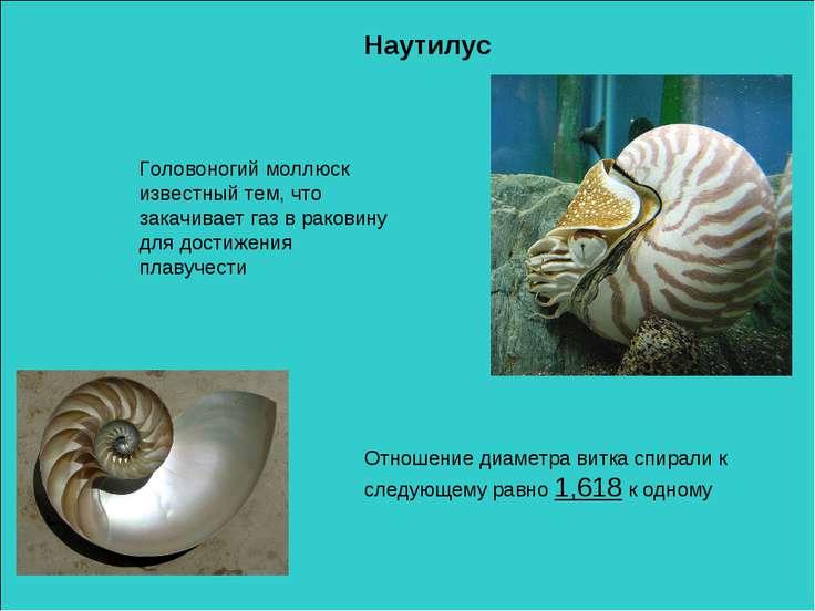 Наутилус Головоногий моллюск известный тем, что закачивает газ в раковину для...