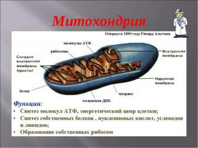 Митохондрия
