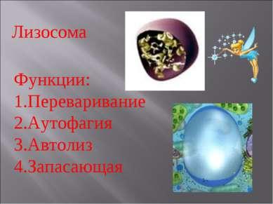 Лизосома Функции: Переваривание Аутофагия Автолиз Запасающая