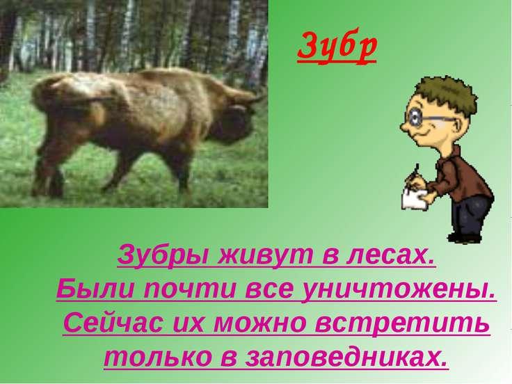 Зубр Зубры живут в лесах. Были почти все уничтожены. Сейчас их можно встретит...