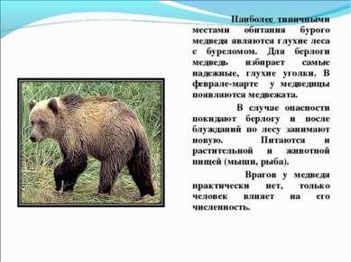 Наиболее типичными местами обитания бурого медведя являются глухие леса с бур...