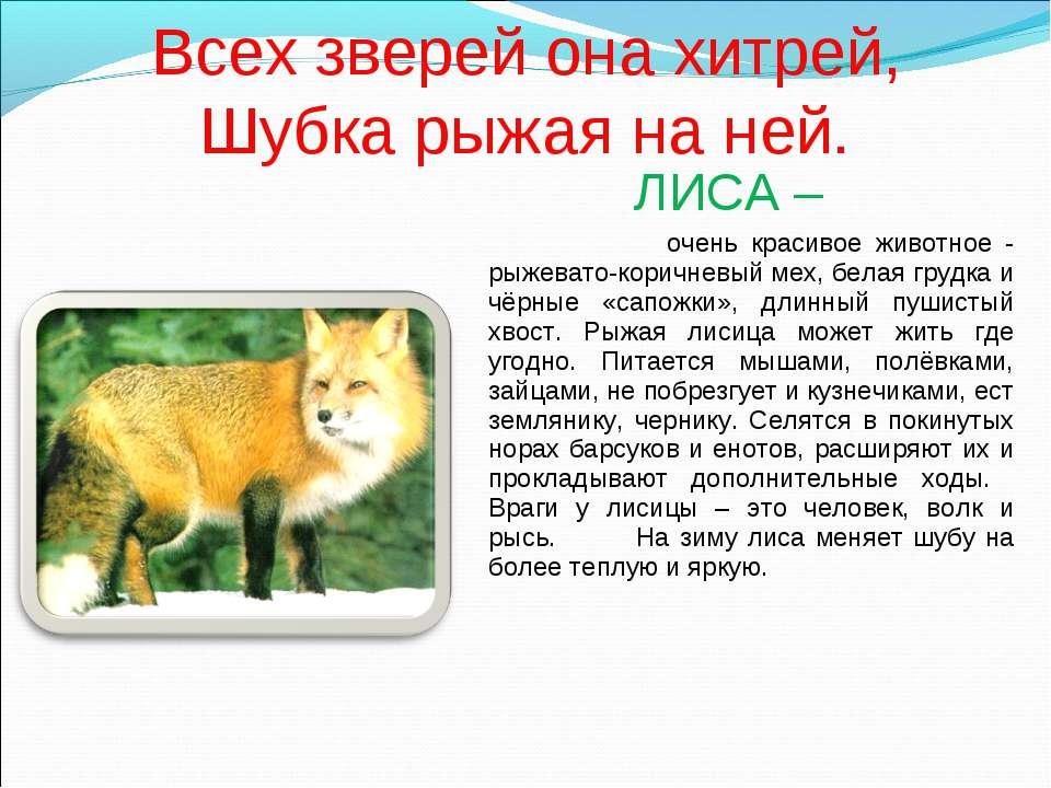 Всех зверей она хитрей, Шубка рыжая на ней. ЛИСА – очень красивое животное - ...