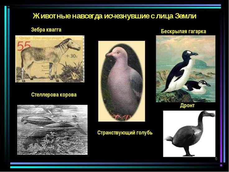 Животные навсегда исчезнувшие с лица Земли Зебра квагга Странствующий голубь ...