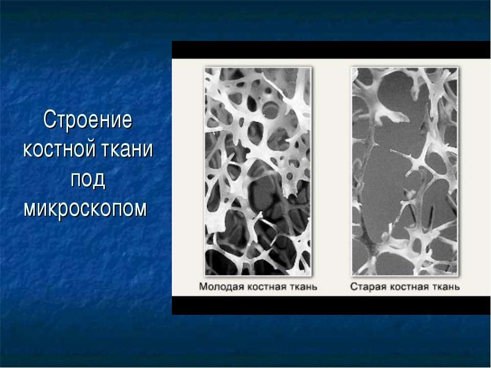 Строение костной ткани под микроскопом