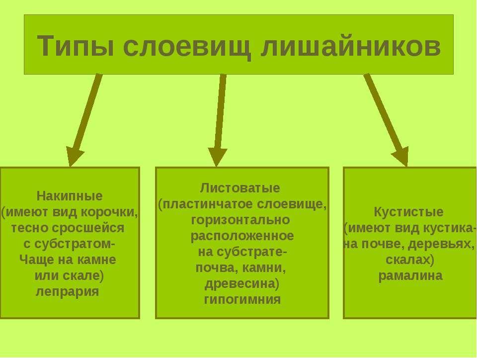Типы слоевищ лишайников Накипные (имеют вид корочки, тесно сросшейся с субстр...