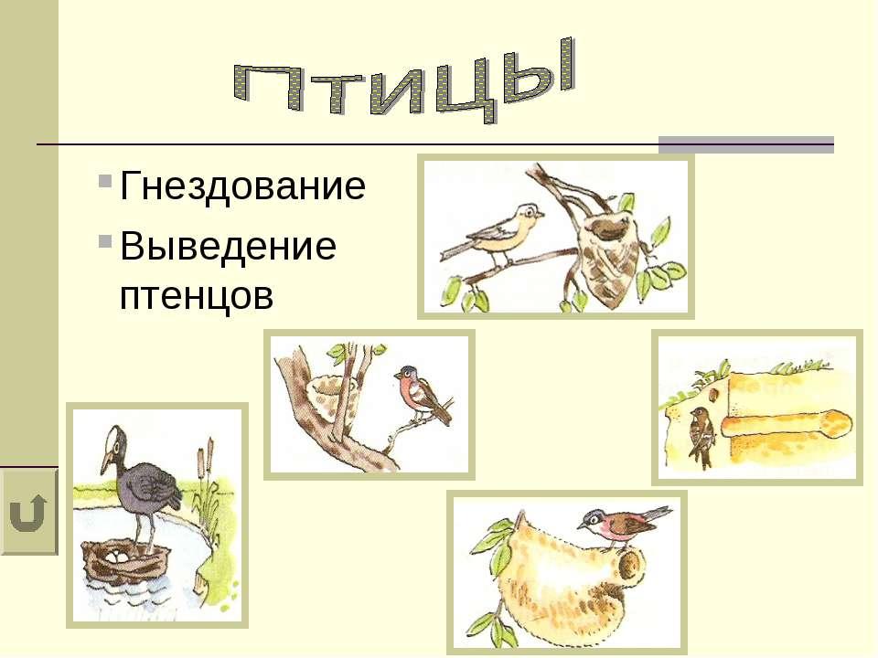 Гнездование Выведение птенцов