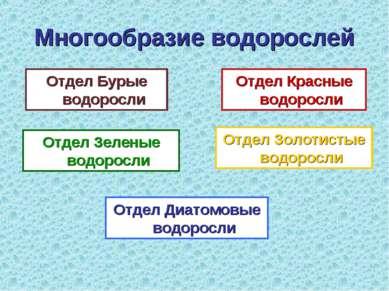 Многообразие водорослей Отдел Бурые водоросли Отдел Красные водоросли Отдел З...