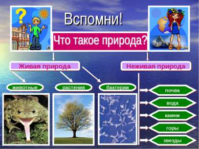 Вспомни! Живая природа Неживая природа животные растения бактерии почва вода ...
