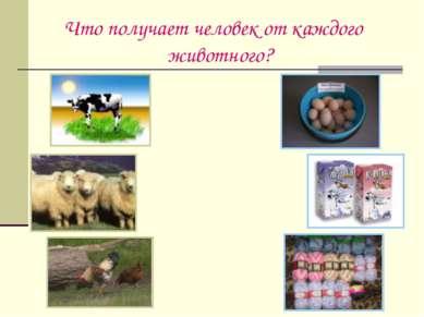 Что получает человек от каждого животного?