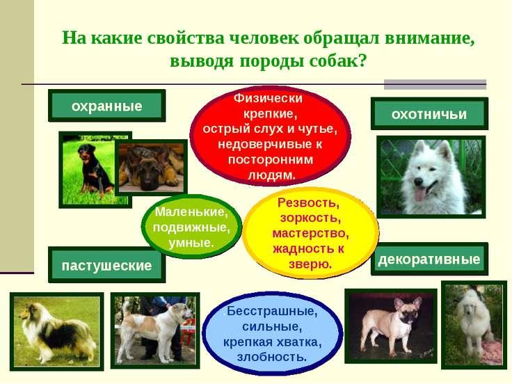 На какие свойства человек обращал внимание, выводя породы собак? охранные пас...