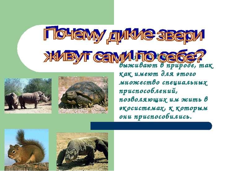 Дикие животные выживают в природе, так как имеют для этого множество специаль...