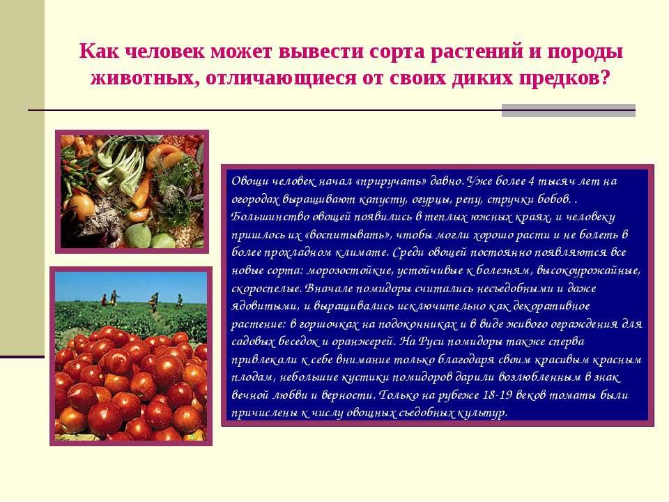Как человек может вывести сорта растений и породы животных, отличающиеся от с...