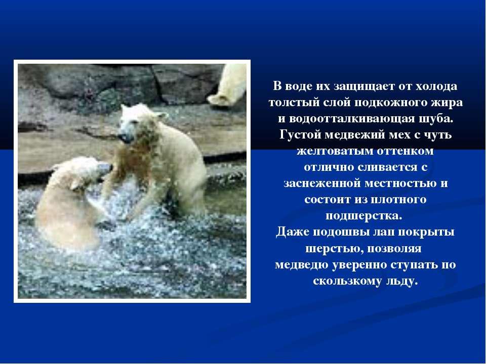 В воде их защищает от холода толстый слой подкожного жира и водоотталкивающая...