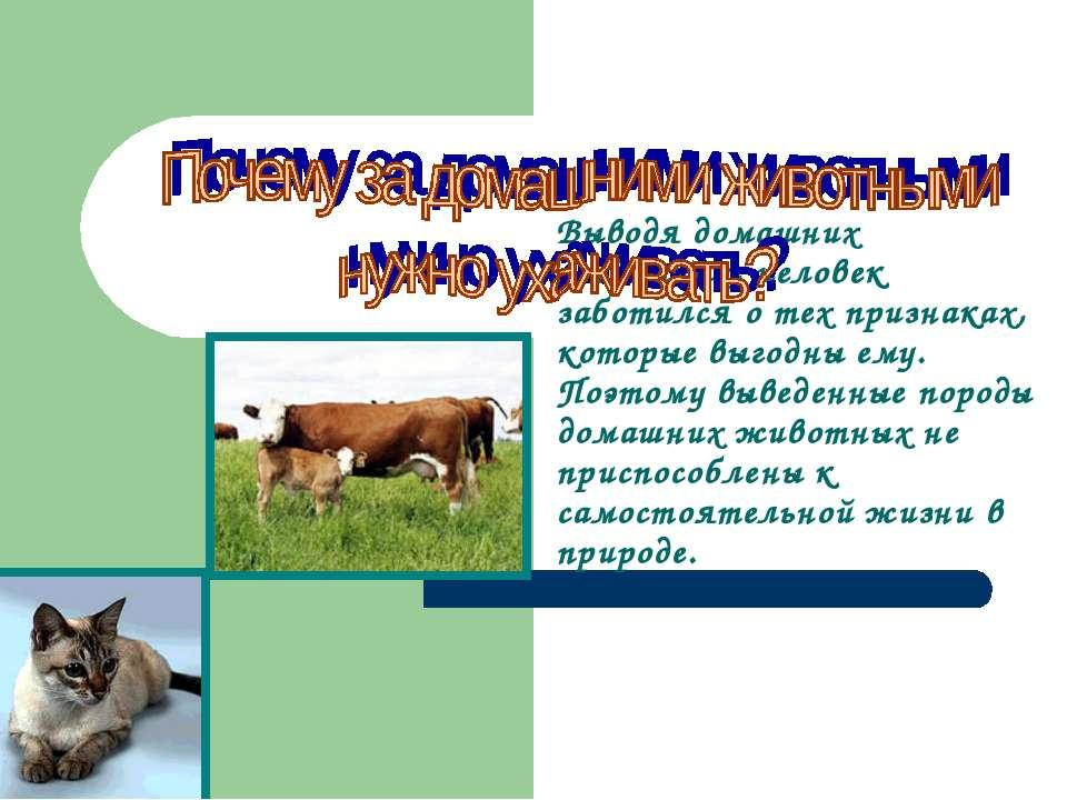 Выводя домашних животных, человек заботился о тех признаках, которые выгодны ...