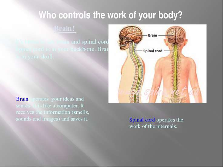 Who controls the work of your body? Brain! It's better to say brain and spina...