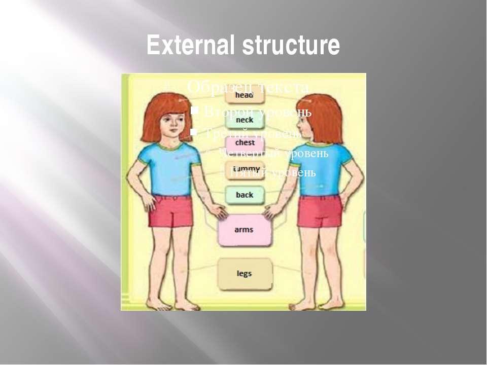 External structure