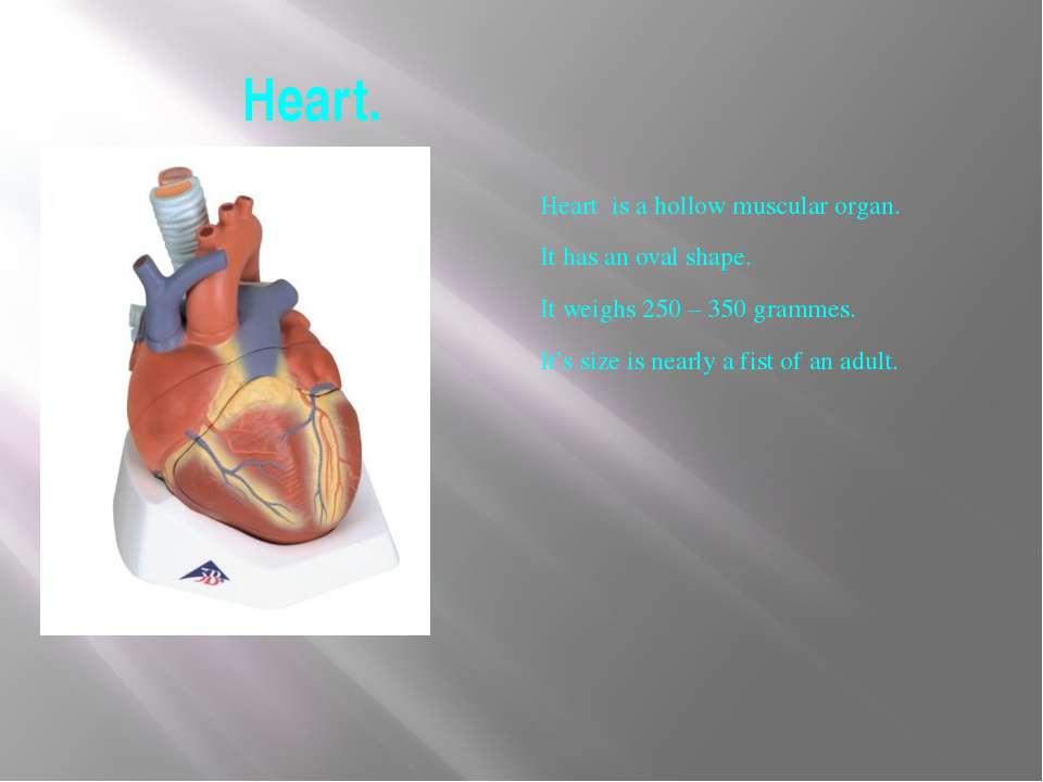 Heart. Heart is a hollow muscular organ. It has an oval shape. It weighs 250 ...