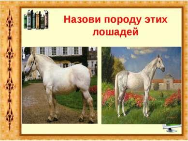 Назови породу этих лошадей