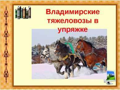Владимирские тяжеловозы в упряжке