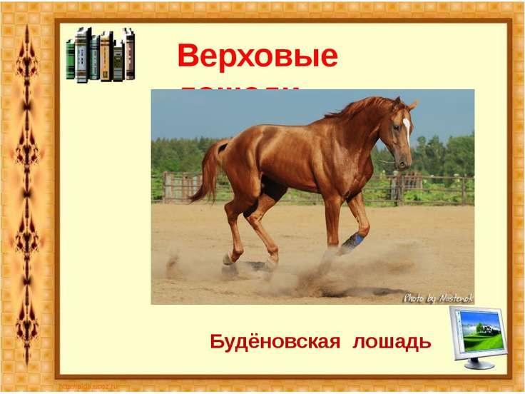 Верховые лошади Будёновская лошадь