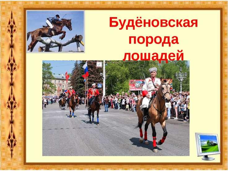 Будёновская порода лошадей